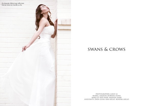 Swans and Crows Lanly Le Photography